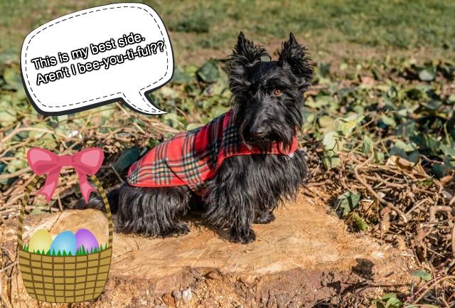Molly Dog Park Diva.jpg