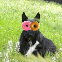 Friday's Foto Fun - Donut Day