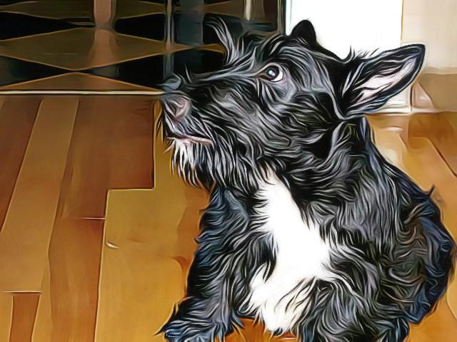 stuart-puppy-3