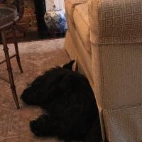 Doggie Vacay
