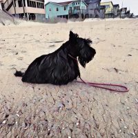 Watercolor Wednesday - Beachy Keen